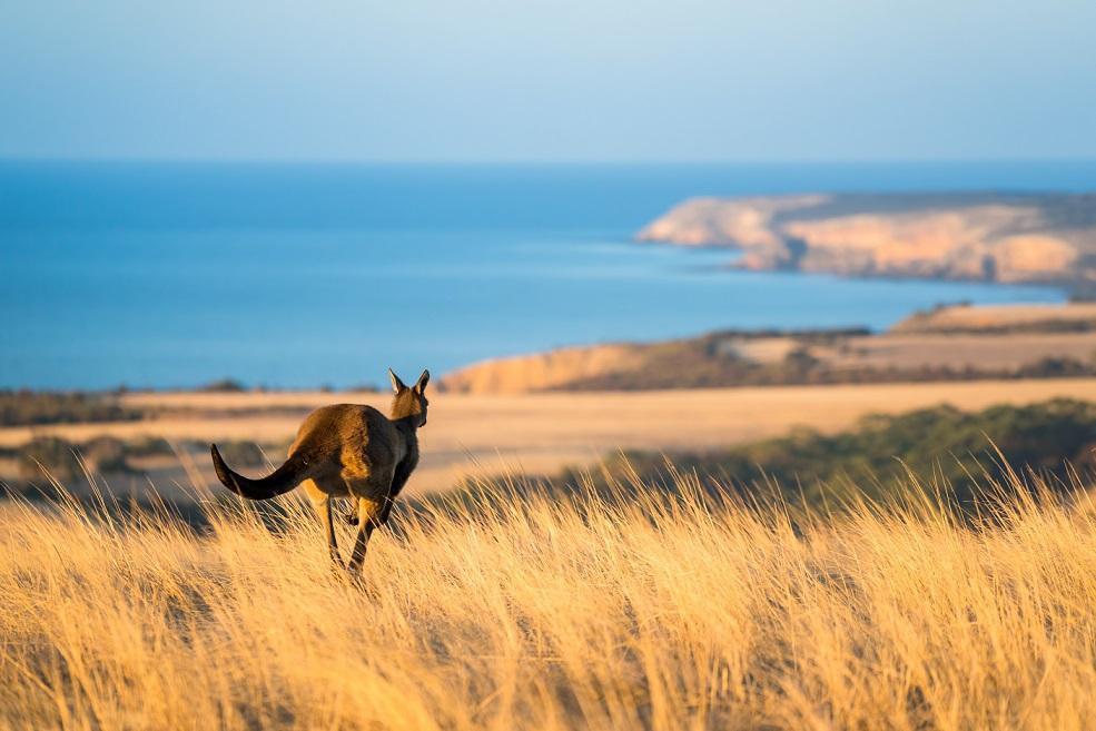 Découvrez Kangaroo Island !